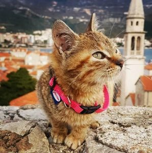 Meet the Cat Who's Traveling Around the World_Bad Yogi