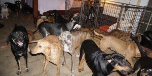 How a Woman Is Saving Dogs During Hurricane Dorian - Bad Yogi