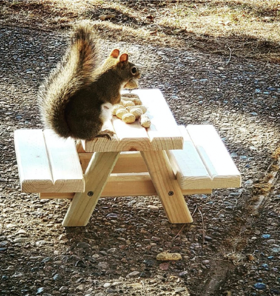 squirrel picnic table feeder